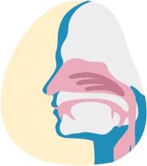 Paveikslėlyje rodomas padidintas nosį ir burną apimančių kvėpavimo takų vaizdas
